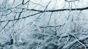 Prognoza pogody na jutro: pochmurno, lokalnie poprószy śnieg