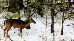 """W Beskidach """"zima pokaże się dopiero w styczniu"""""""