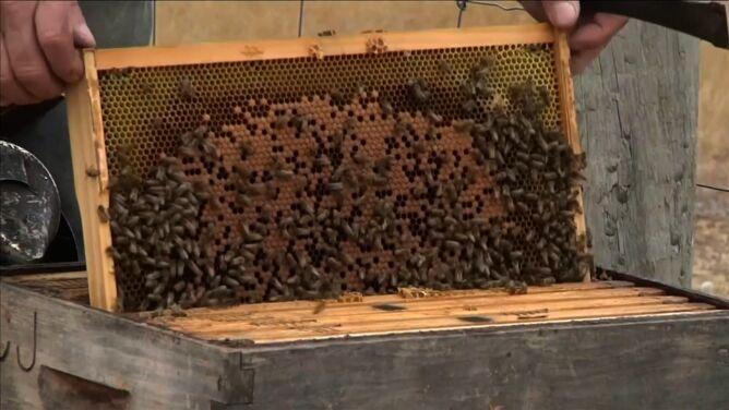 """W pożarach spłonęło tysiąc uli. <br />Pszczoły """"nie są takie jak przedtem"""""""