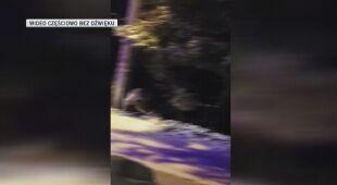 Rumunia: Policja odstraszyła niedźwiedzie syrenami